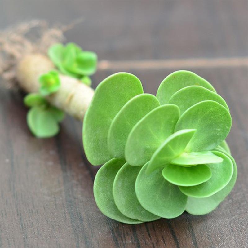 【包邮】观叶植物 金钱木套装 桌面绿植盆栽 防辐射净化空气