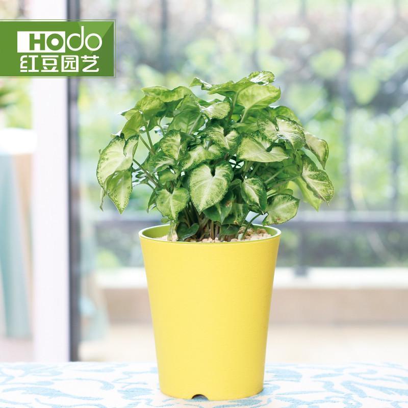 含盆栽好 室内盆景客厅植物迷你盆栽创意绿植