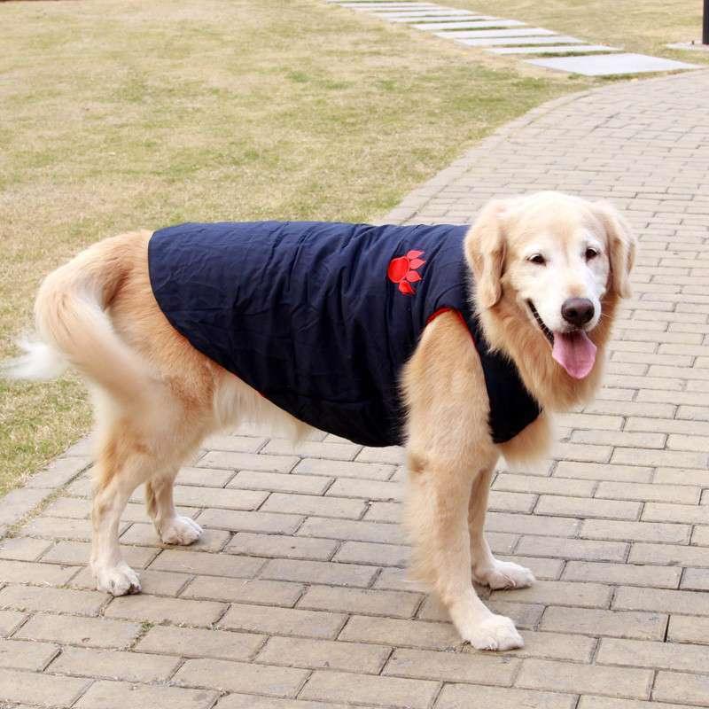 中大型犬两脚滑雪衫图片