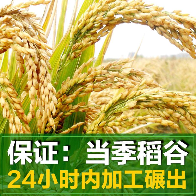 崇明岛 稻鸭大米10kg(20斤)生态香米