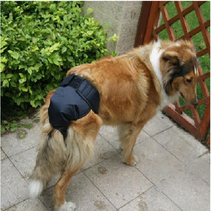 中大型犬生理裤 宠物狗狗生理裤 大狗金毛哈士奇萨摩耶 大号图片