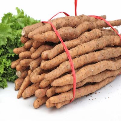 强于 手选焦作温县垆土铁棍山药5斤新鲜装 铁杆怀山药生鲜蔬菜