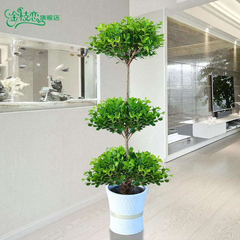 大型盆栽植物搖錢樹發財樹金錢榕客廳辦公室綠植招財樹開業盆栽