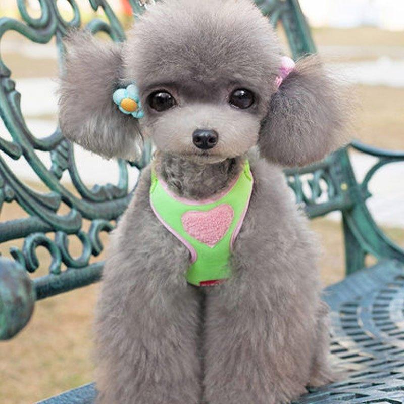 (牵引绳 背带)可爱宠物狗狗狗狗牵引绳胸背带泰迪狗绳狗链子小型犬