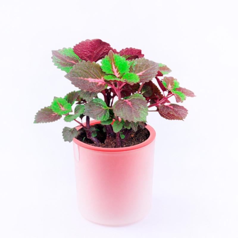 创意桌面迷你小盆栽植物水培室内绿植可爱办公桌卧室盆景净化空气