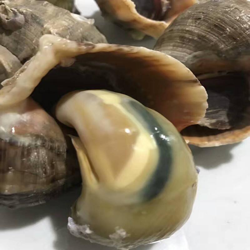 鲜活大海螺新鲜海螺小海螺海鲜水产贝类连云港特产野生地笼海螺