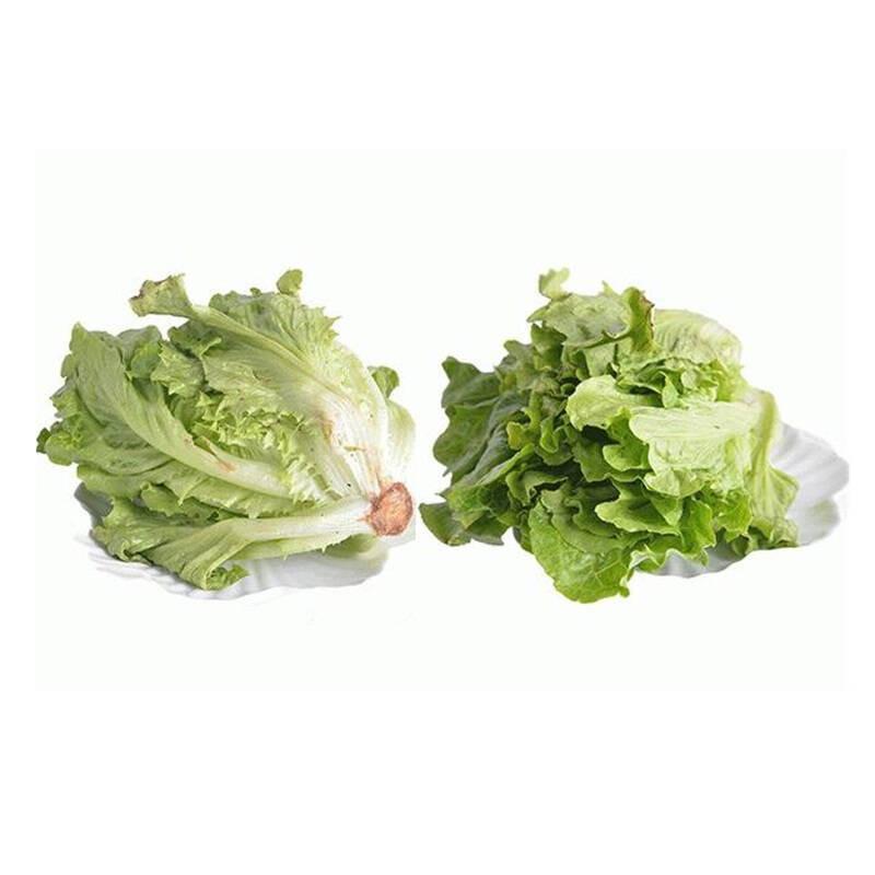 春节正常发花叶生菜500g 绿萝莎 沙拉菜 新鲜图片