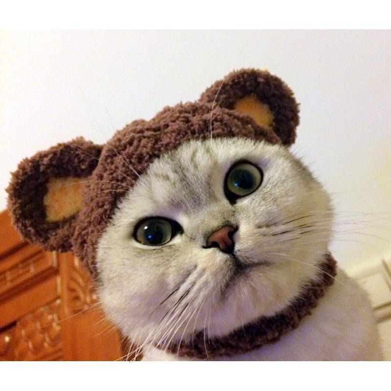 宠物帽子可爱小熊造型变身装帽猫咪帽子头套狗帽头饰用品